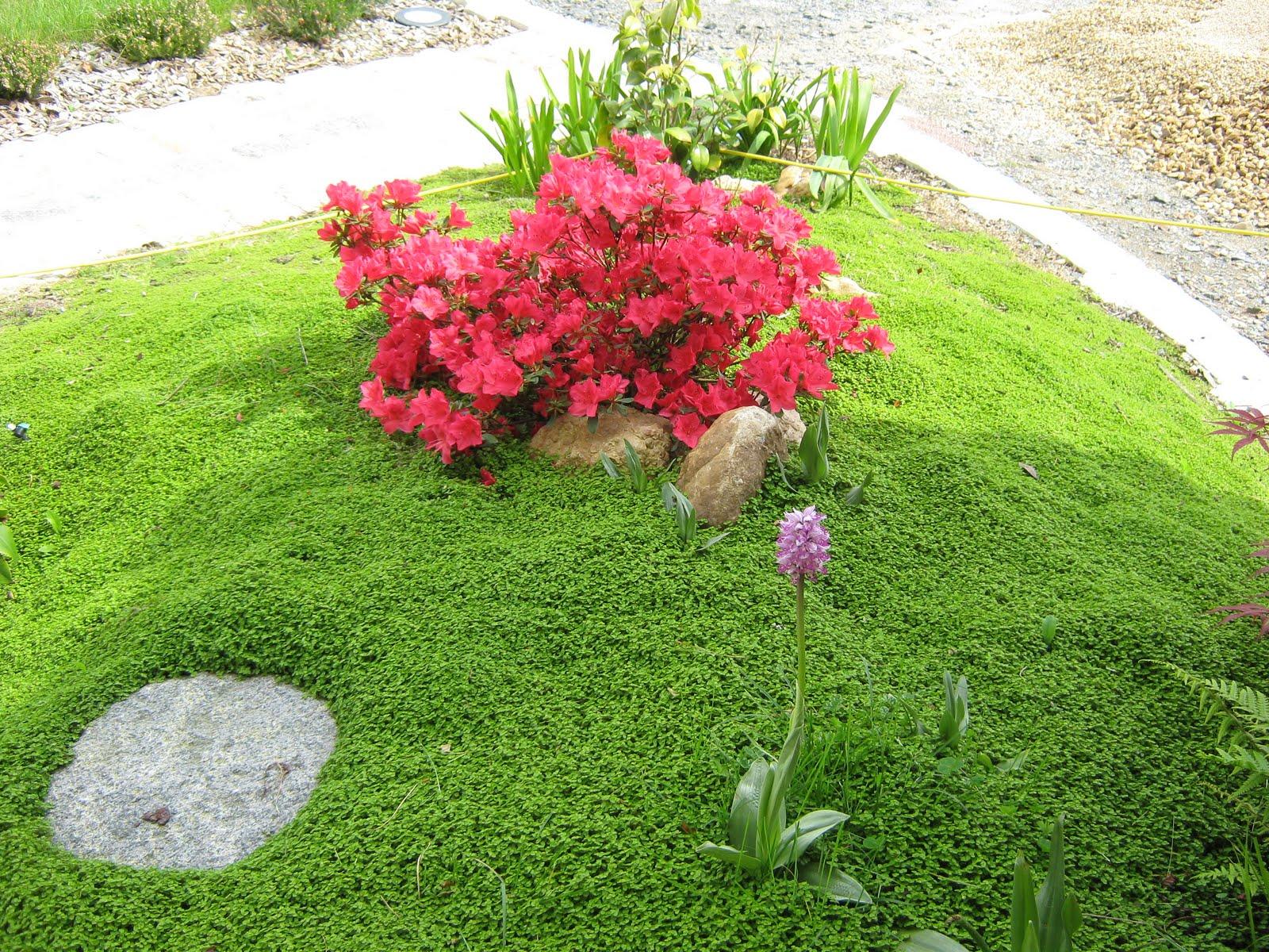 tout savoir sur les plantes vivaces isgp actualit s web. Black Bedroom Furniture Sets. Home Design Ideas
