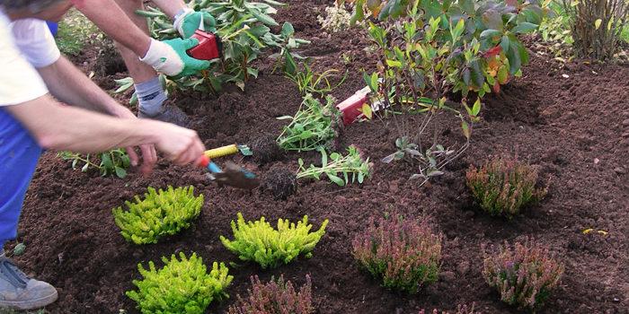 Tout savoir sur les plantes vivaces isgp actualit s web for Plantes et arbustes vivaces