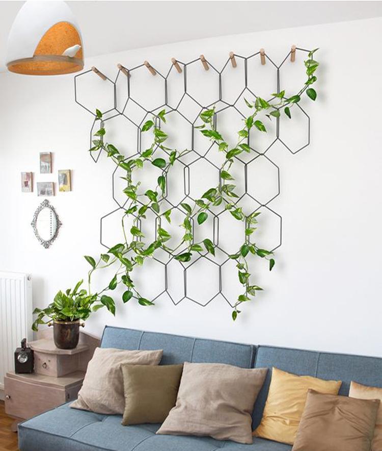 treillage-plantes